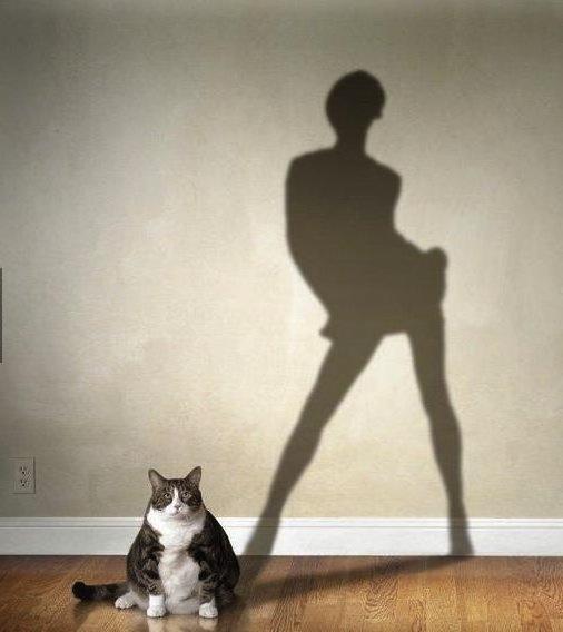 A True Cat Model